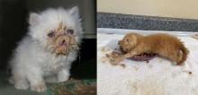 34 fotos de gatos que fizeram a maior bagunça na hora do lanche