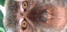 Macaco rouba celular de jovem e tira selfies antes de descartá-lo