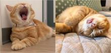 Gato vira webcelebridade por suas fotos hilárias mostrando sua maior habilidade: dormir