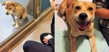 Veja a transformação emocionante de 20 cães antes e depois da adoção