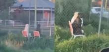 Fiscais da vida alheia: Labrador e pit bull são vistos sentados em cadeiras observando vizinhança