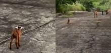 Bombou! Bebê cabrito corre para sua mamãe após se perder da família ao cair em poço