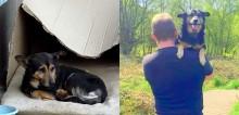 Voluntários salvam cão que vivia nas ruas e que teve seu único bem roubado: seu travesseiro