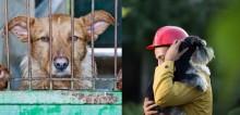 Nova lei permite que policiais entrem em residências onde haja maus-tratos a animais em capital mexicana