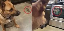 Cachorro salva a vida de beija-flor ferido e os dois se tornam melhores amigos; confira