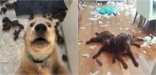 25 fotos de cachorros que fizeram a maior bagunça em casa
