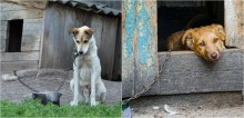 Assembleia de SP vota projeto de lei que proíbe acorrentar animais domésticos