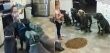 Super educados, 6 pit bulls esperam ordem de menininha de 4 anos para comer ração - vídeo
