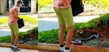 Idosa leva cobra de estimação para passear no centro de BH e vídeo viraliza na internet