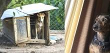 Nova lei permite que policiais invadam residências onde haja maus-tratos a animais em capital mexicana