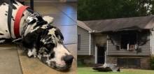 Dogue alemão salva família de incêndio que se alastrou por sua casa de madrugada