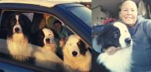Com câncer terminal, mulher pede ajuda para que alguma família acolha seus três cães juntos