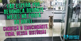 Cão espera por aeromoça durante meses na porta do hotel. Conheça o emocionante final dessa história!