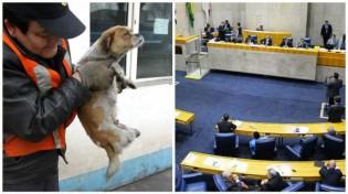 Políticos aprovam sacrifício de animais de rua e multa para quem alimentá-los.