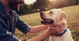 5 maneiras para deixar seu cão feliz e saudável