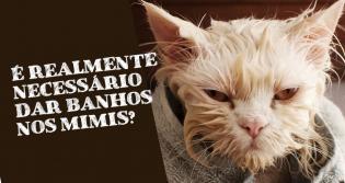 É realmente necessário dar banhos em gatos?