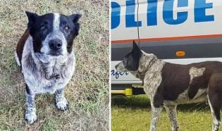 Menina desaparecida era mantida em segurança por cachorro cego, surdo e idoso