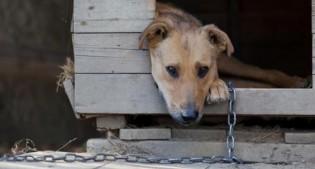 Manter animais acorrentados pode ser proibido em Curitiba, multa poderá chegar a R$200 mil