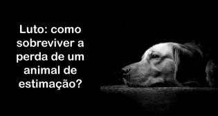 Luto: como sobreviver a perda de um animal de estimação?