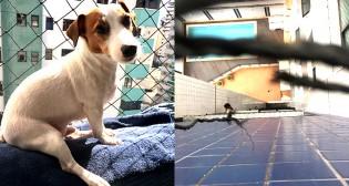 Muita Sorte: Cachorrinho Lucky cai do 7º andar e sai ileso