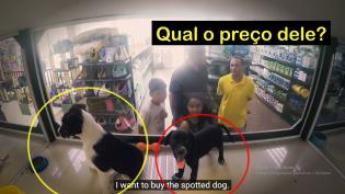 ONG secretamente substitui os animais de uma PetShop por seus animais regatados (Veja a incrível reação das pessoas)