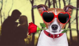 Cães podem ajudar você a conseguir um encontro amoroso e fazer você parecer mais atraente