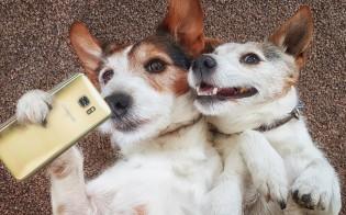 6 motivos pelos quais ter 2 cães é melhor que ter apenas 1