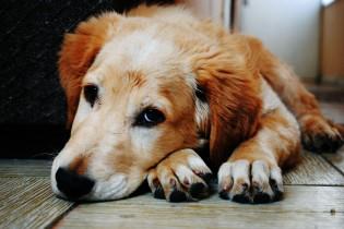 E se um cachorro pudesse falar? O que ele falaria?