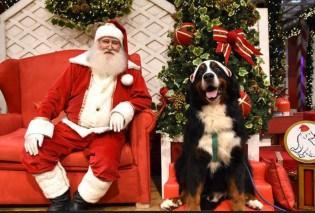 Sucesso nos shoppings: Tire foto do seu pet com o Papai Noel