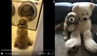 Cão adorável dá apoio emocional para brinquedo durante banho (VEJA O VÍDEO)
