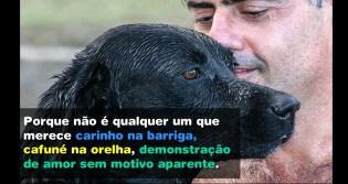 Realmente, não se deve tratar cachorro como gente...(Leia o texto até o final)