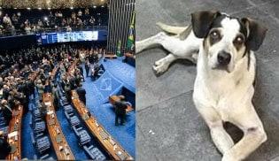 Senado votará com urgência leis em defesa dos direitos dos animais