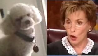 Juíza determina que cão escolha qual é seu verdadeiro dono