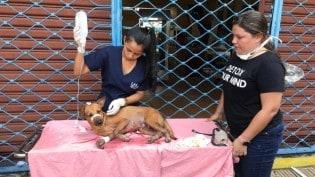 Voluntários atendem animais vítimas de incêndio em Manaus
