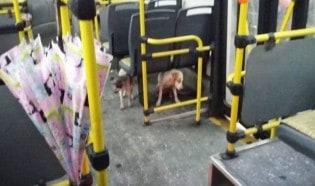 Motorista deixa cães de rua entrarem em ônibus para protegerem-se da chuva e frio
