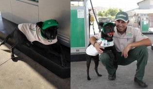 """""""Cão frentista"""" ganha crachá e uniforme em posto e viraliza"""