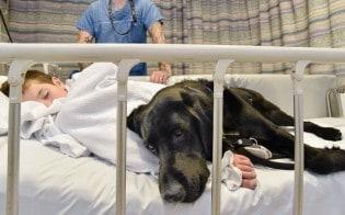 Criança com autismo severo só se acalma quando está com seu cão-guia