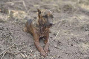 Cão Vitinho espera por donos em Brumadinho e comove internautas