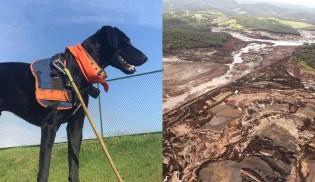 Cão que atua em Brumadinho já foi jogado no lixo anos atrás em SP