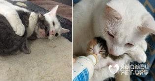 Gato macho adota dezenas de gatinhos órfãos (veja vídeo e fotos)
