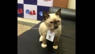 """Gato é """"contratado"""" pela OAB e ganha até um crachá com foto"""