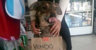 Cão com câncer vende roupinhas para pagar sua quimioterapia