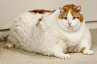 Saiba o que pode causar obesidade no seu pet