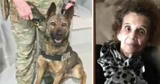 Cão salva mulher idosa que estava perdida na floresta