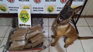 Cão farejador encontra 37 tabletes de maconha em cidade do RS