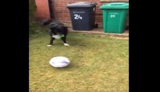 Carteiro só pode entregar cartas nesta casa se jogar futebol com o cão (veja o vídeo)