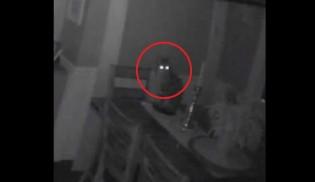 Mulher descobre que o gato está invadindo sua casa todas as noites