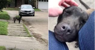 Cachorrinha abandonada se 'derrete' de alegria ao perceber que será adotada finalmente