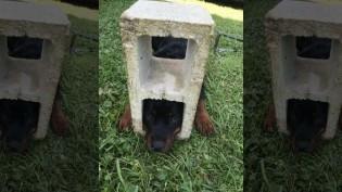 Bombeiros usam ferramenta hidráulica para libertar cabeça de cão de bloco de concreto
