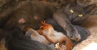 Mãe gata adota 4 esquilos recém-nascidos